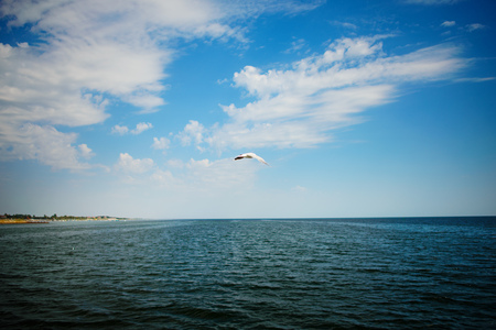 One seagull flies over the sea on a wonderful summer day. Stock Photo