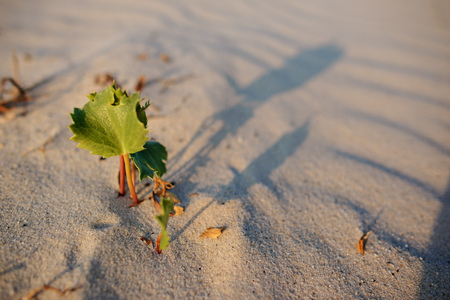 Green shoot in the desert - conceptual photo for growth in adverse conditions. Stock Photo