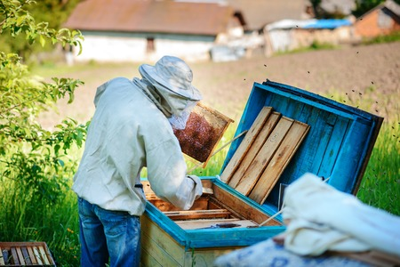 Apiary. The beekeeper works with bees near the hives.