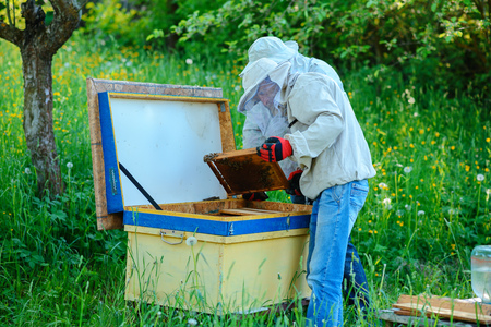 Two beekeepers work on an apiary. Summer. Stockfoto