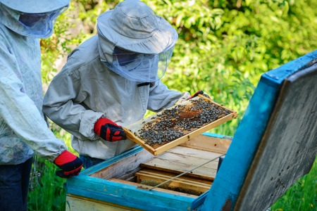 Two beekeepers work on an apiary. Summer. 免版税图像