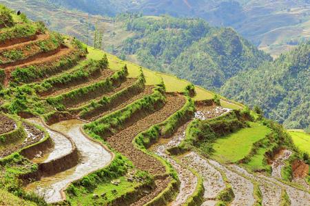 Rice Terraces of Sapa in Vietnam.