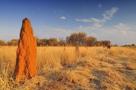 Australia, Outback, Northern Territory, Termite Mounds. Stock Photo