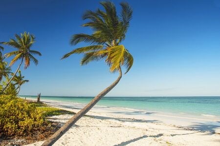 White sand tropical beach with palm trees on north west coast of Zanzibar island, Tanzania.