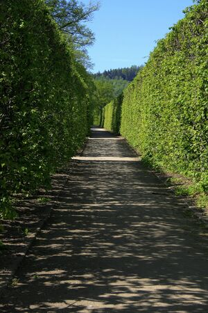 shadowed: Shadowed summer garden way
