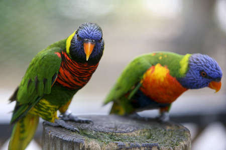 parot: Colorful exotic Parots