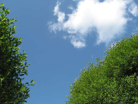 Trees with a cloud on the sky