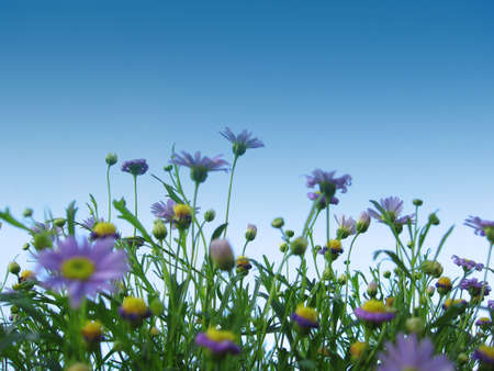 Blue flowers against the sky Stock Photo