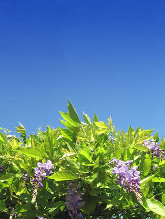 Purple flowers with sky background