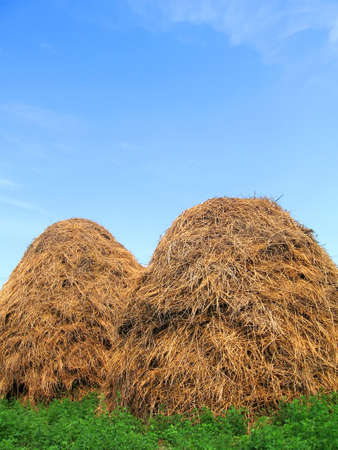 Two hayracks on alfalfa field Stock Photo