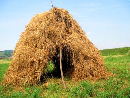 Hut in the field photo