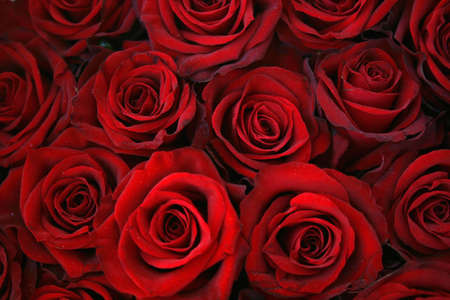 Red roses background - beautiful texture