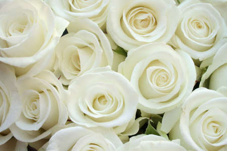 arrangement: Beautiful white roses for wedding - texture