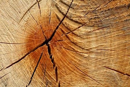 Wood texture - section through a beech