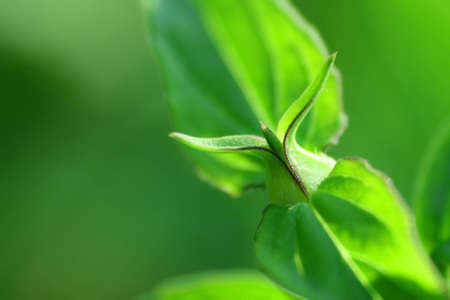 Little green bud of a plant in close view Stock Photo