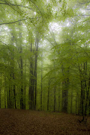 Mysterious mist raising after rain in the forest photo