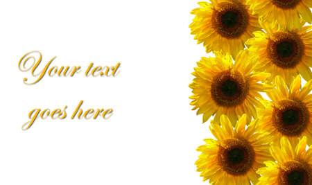 Sunflower design with copy space for text photo