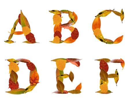 Cartas de capital realizados por hojas de otoñales