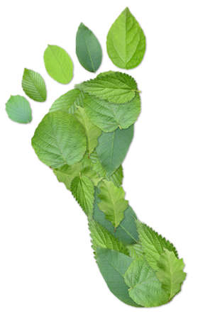 Green footprint made by real leaves isolated on white photo