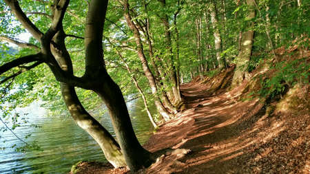 path to romance: Path in a forest near a lake