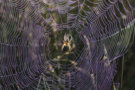 irridescent: Irridescent cobweb Stock Photo