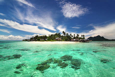rainforest tree: tropical island beach scenery