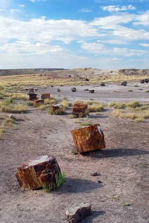 petrified fossil: Several colorful petrified tree on the ground