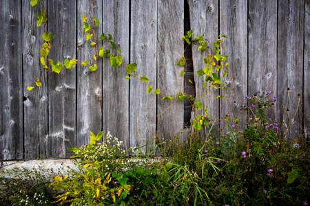 old barn: Old Barn Board Background
