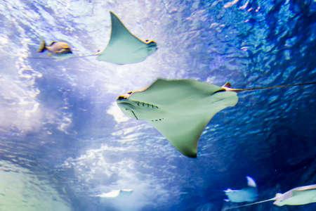 海洋生物の水中ビュー