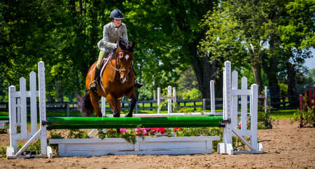 equine: equestrian riding in hunter and jumper ring Editorial