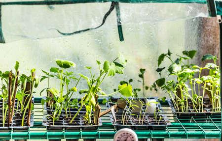 germinate: Greenhouse View