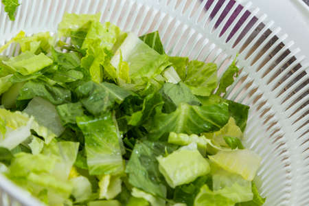 Cutting Lettuce for Salad at Home Stok Fotoğraf