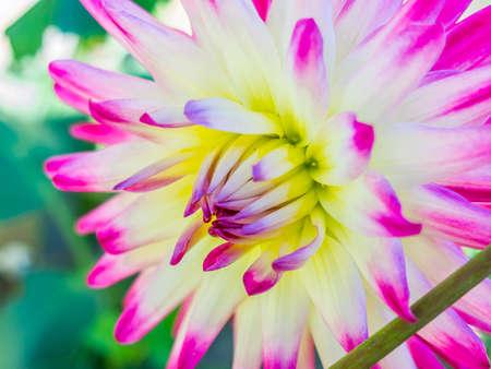 Floral Closeup Stock Photo