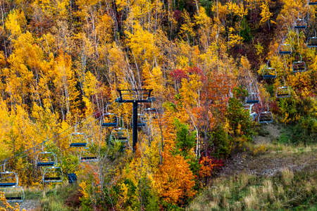 intensely: Intensely coloured fall forest of foliage on mountainside Stock Photo