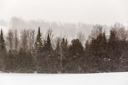 thick growth: Rural Winter Landscape View