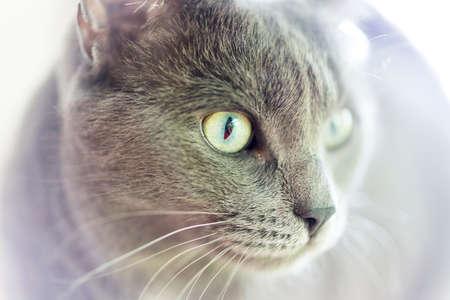 Domestic Housecat Zdjęcie Seryjne