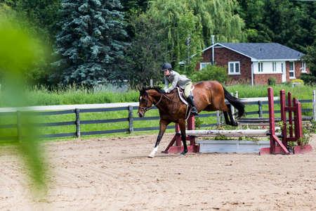 equestrian riding in hunter and jumper ring Banco de Imagens