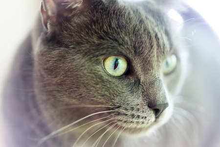 housecat: Domestic Housecat Stock Photo