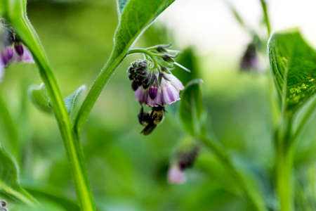 Bee Pollenating Flower
