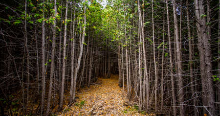 sheltered: sheltered forest pathway Stock Photo