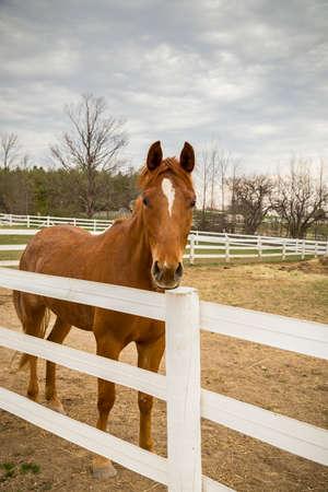 Equestrian Farm Area Reklamní fotografie