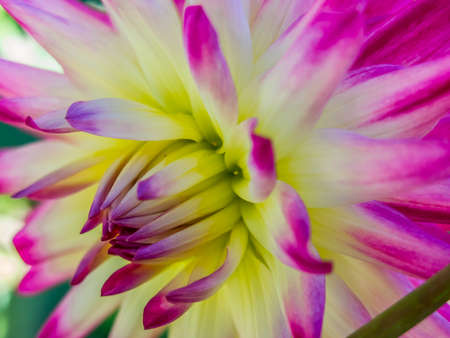 Floral Closeup Reklamní fotografie