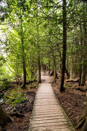Scenic Pathway Outdoors