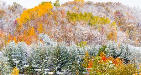 freshly fallen snow on fall foliage