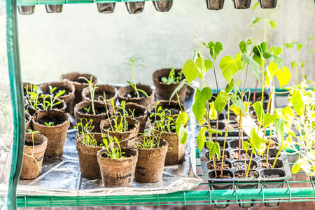 Cultivating Seedlings in a Greenhouse Indoors