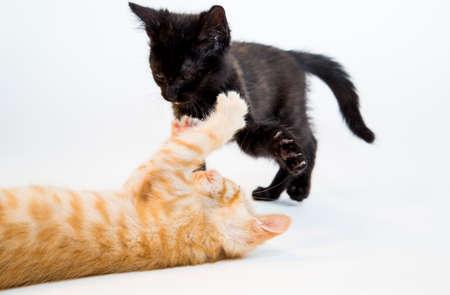 cuddles: Feline in the Bright Studio Setting Stock Photo