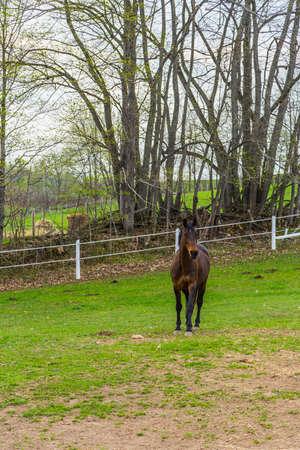 Equestrian Farm Area Banco de Imagens