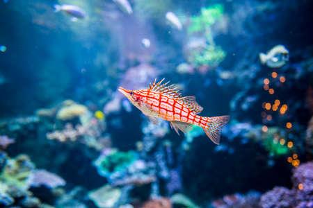 Underwater view of marine life 写真素材