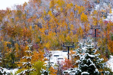 freshly fallen snow: freshly fallen snow on fall foliage