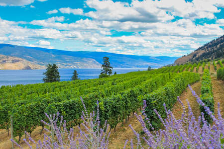 Scenic view of Okanagan Valley, BC Imagens